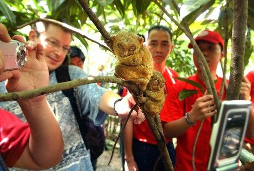 Tarsero Turismo responsable animales