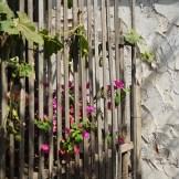 Casa-Do-Professor-flores-entrada