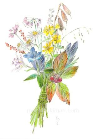 sold out「秋の野を歩く望月麻里(鉛筆、色鉛筆)素材:マットコート紙(ややツヤあり)illustrated by Mari Mochizuki