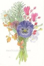 sold out「冬の庭のブーケ」望月麻里(鉛筆、色鉛筆)illustrated by Mari Mochizuki / サポサポ プロジェクト出品用(完売)