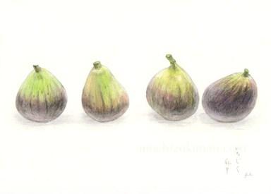 「いちじく」 望月麻里(鉛筆、色鉛筆)illustrated by Mari Mochizuki