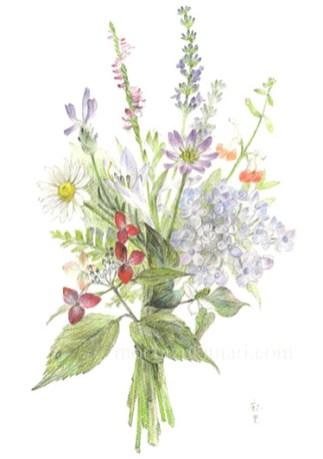 「そよ風・母の庭のブーケ」望月麻里(鉛筆、色鉛筆)illustrated by Mari Mochizuki
