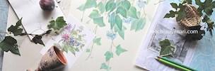 NEWS:望月麻里のオフィシャルサイト・夏のカバー画像