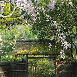 スミレの花をたずねて:北鎌倉・東慶寺