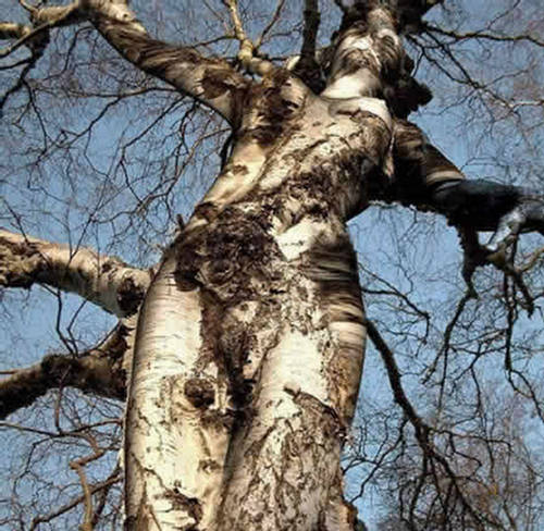 Unbelievable most strange trees in the World - Moco-choco