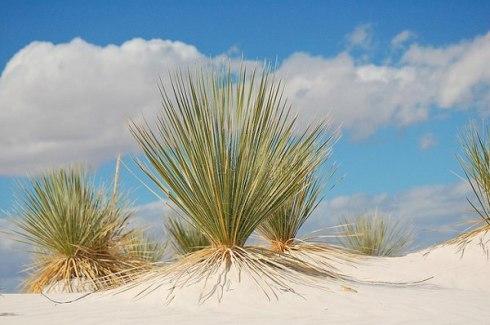 White Sands National Monument 10