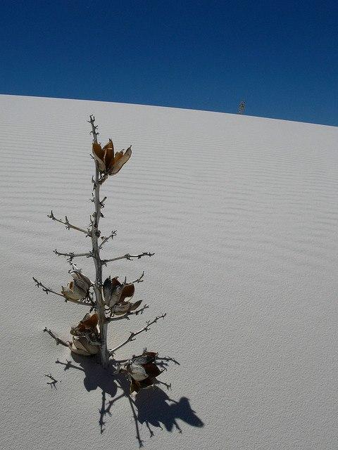 White Sands National Monument 6