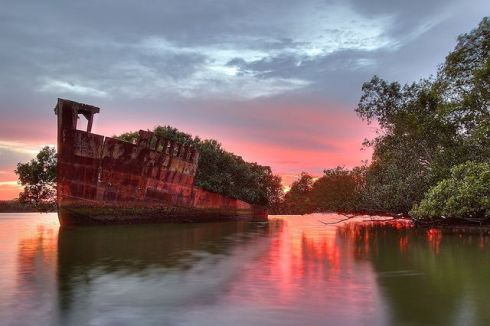 Homebush Bay beautiful floating forest