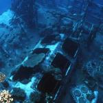 """Russian Wreck"" shipwreck Off Zabagad Island, South Egyptian Red Sea 2"