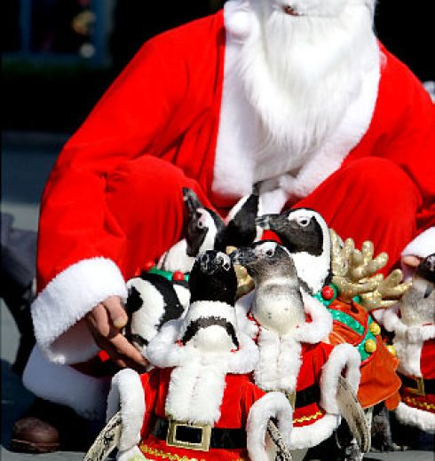 Penguins in Santa suits to welcome Christmas 5