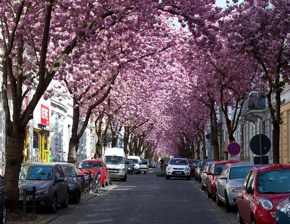 amazing paths around the world Bonn Germany