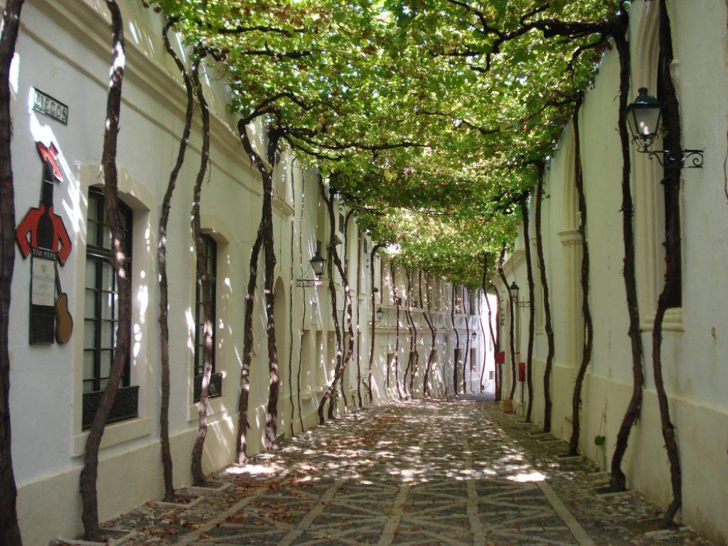 amazing paths around the world Jerez Spain