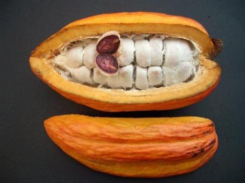 Raw Cacao Bean