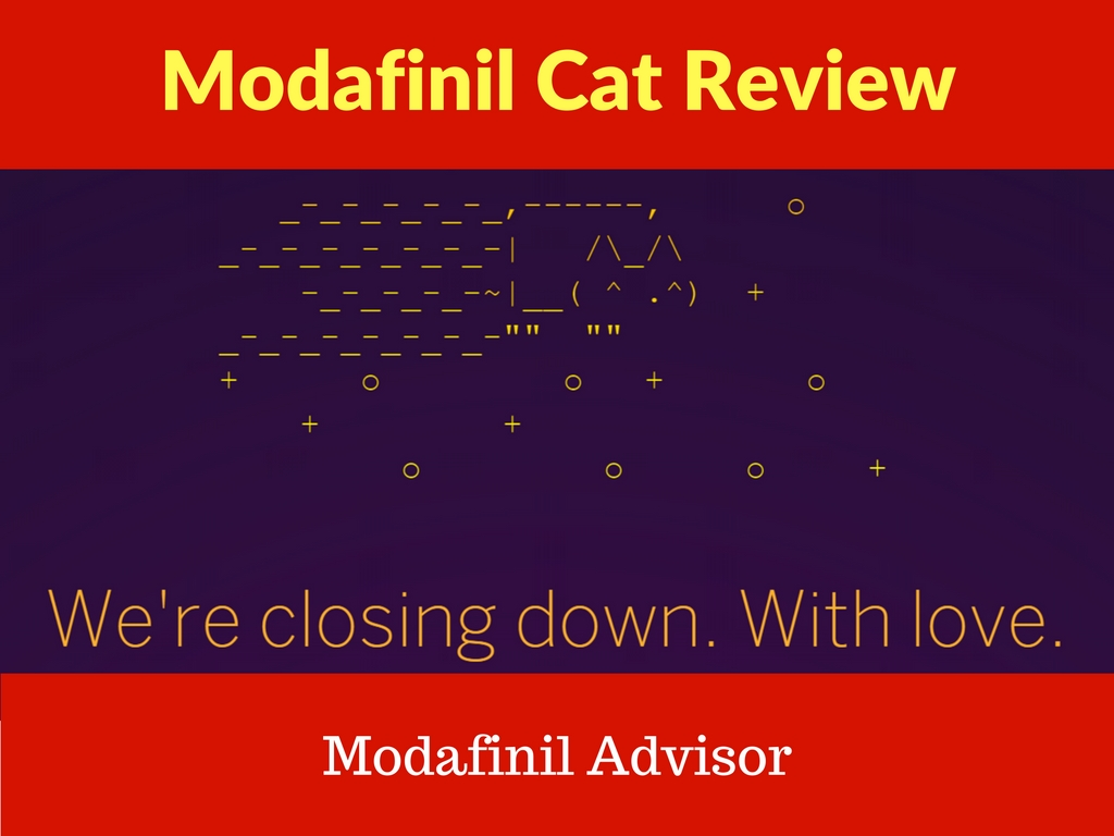 modafinil cat review