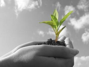 nurture dream clients