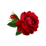 Flowers and Roses Live Wallpaper 1.0 Apk App free download