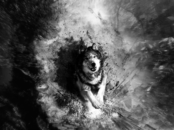 abstract-art-black-and-white-wolf-wallpaper-1