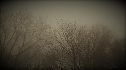 blanc hiver