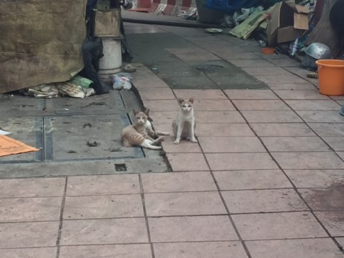 In love with the stray animals in Bangkok tho I wish I could give them a home and food!