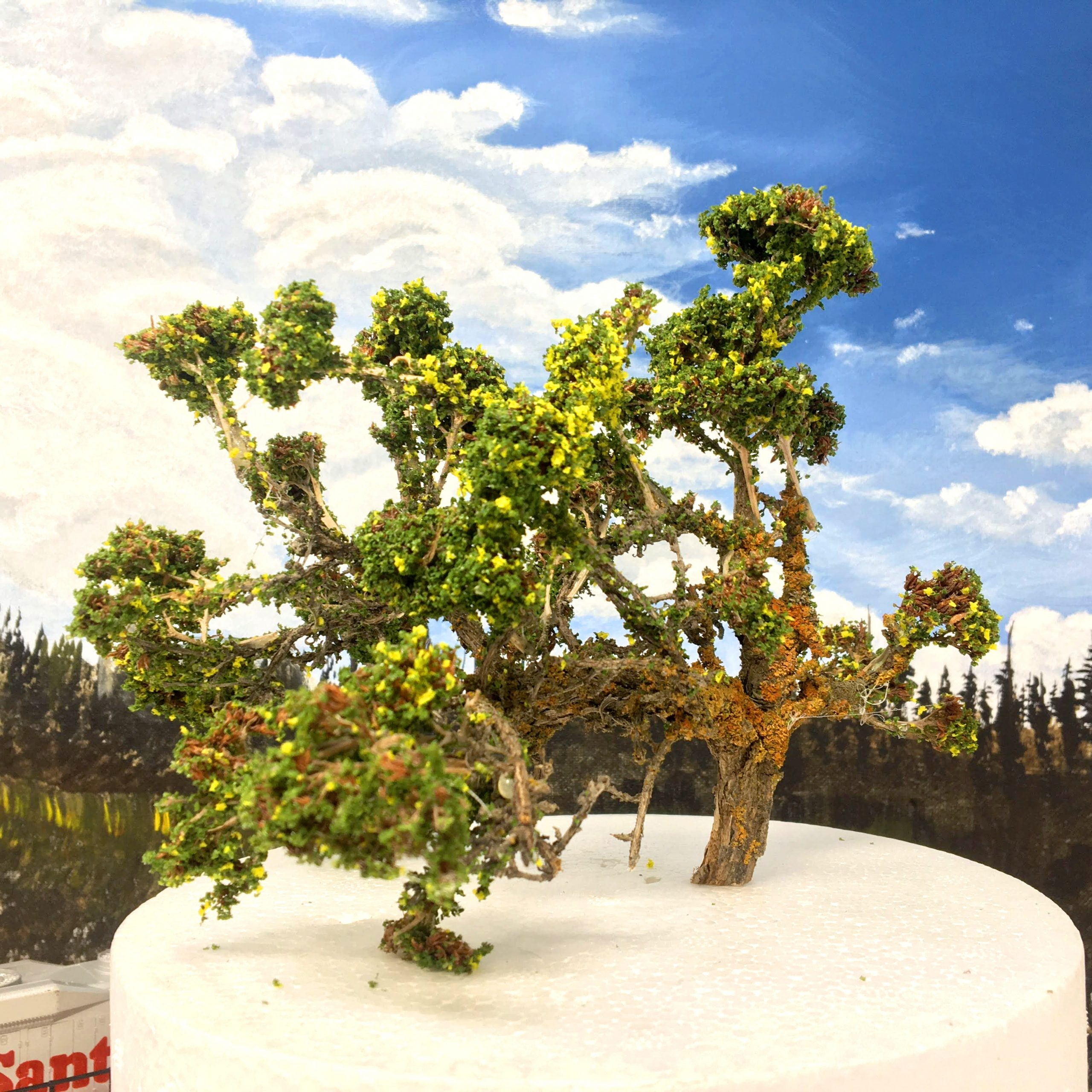 8 Inch Model Trees Example
