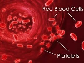 platelet cell