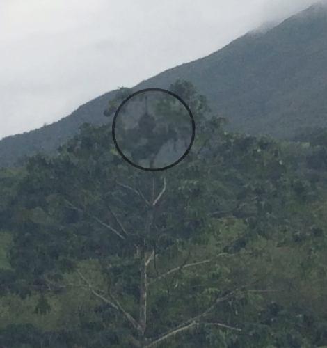 Wildlife near La Fortuna, Costa Rica