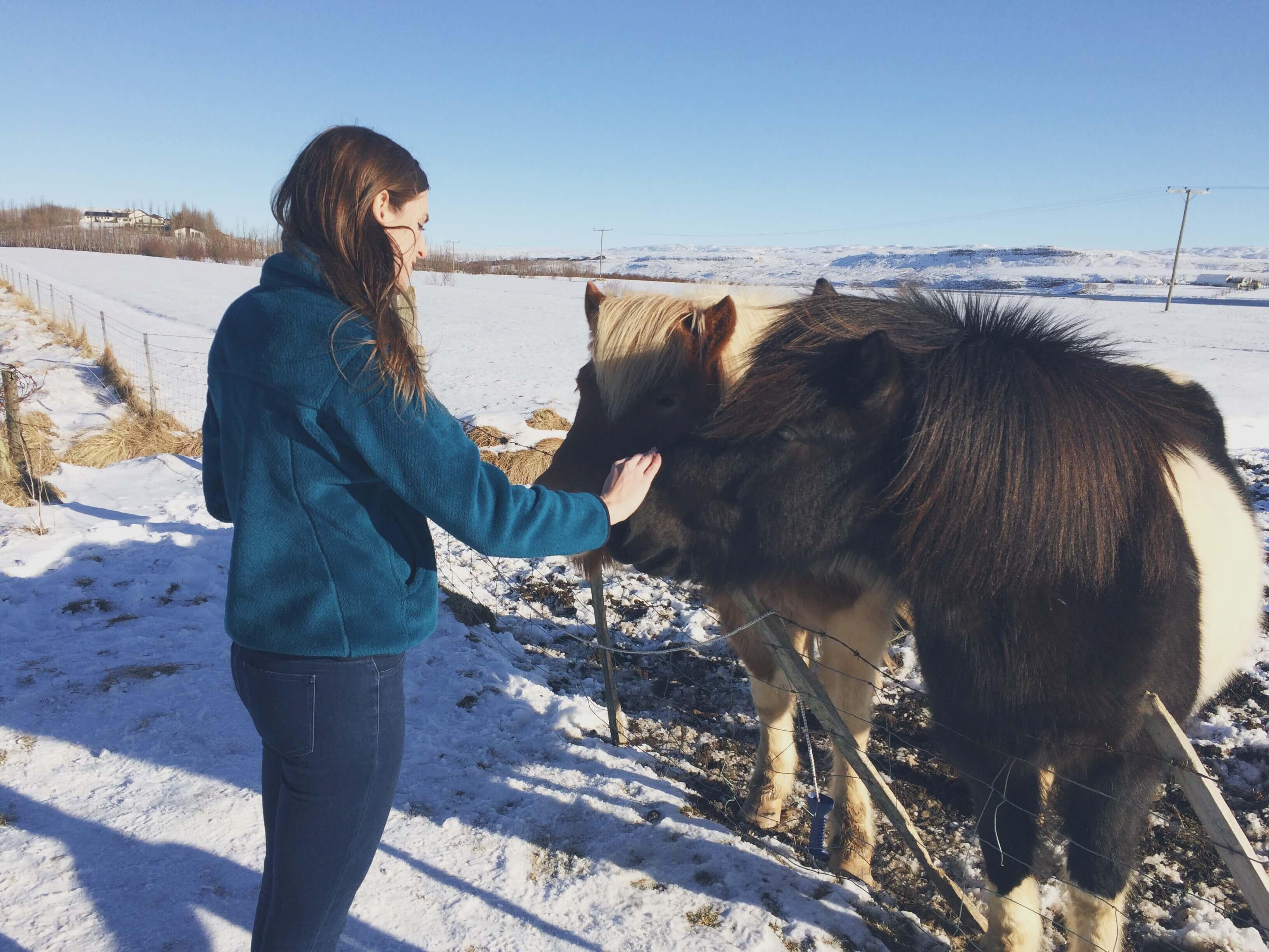 Travel Iceland - Icelandic Horses