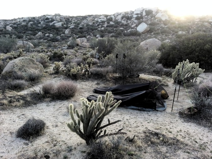 Bivies nestled up against the wonderfully unpleasant cholla catcti.