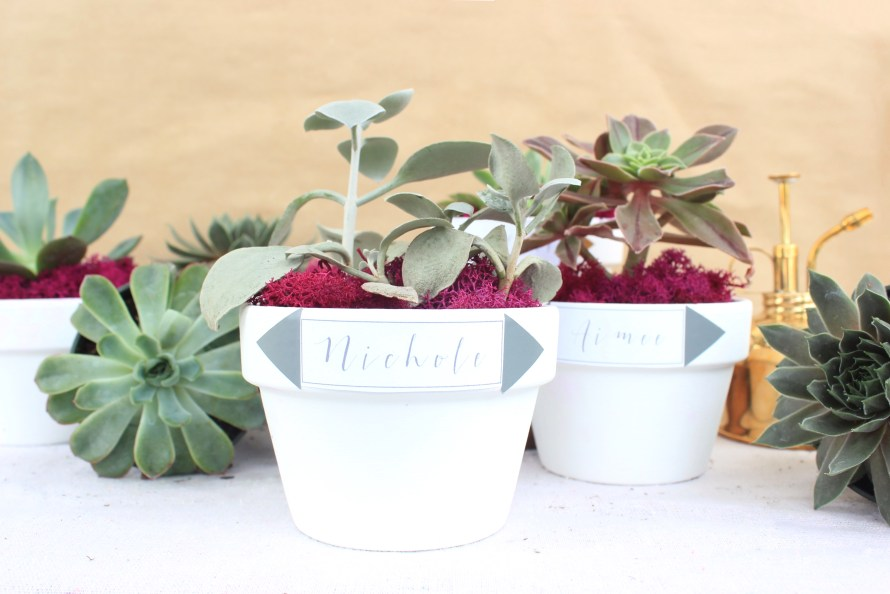 DIY Succulent Party Favors