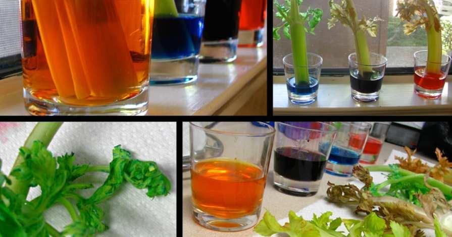 Celery Leaves Experiment – Modern Day Moms