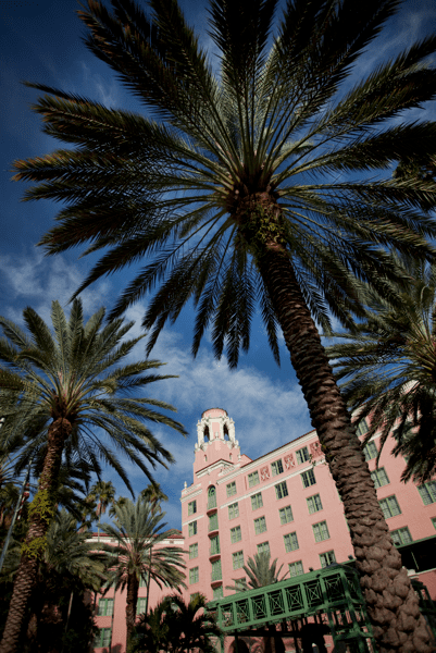 Vinoy tower and palm trees1