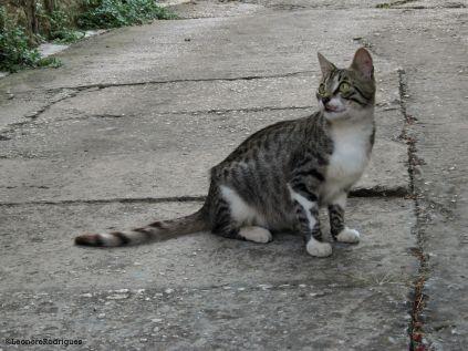 Day 208 - Euro kitty 4
