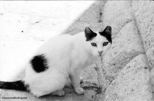 Day 215 - Dubrovnik kitty