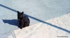 Day 215 - Sipan kitty
