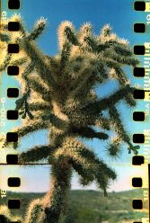 rs Cactus tree
