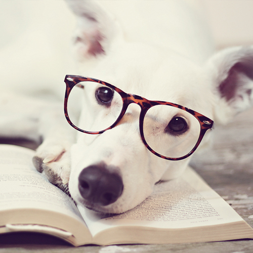 Photo Contest Top Dogs Modern Dog Magazine Modern Home Revolution