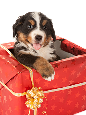 ASPCA Its Okay To Give Pets As Gifts Really Modern