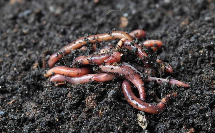 Image result for worms