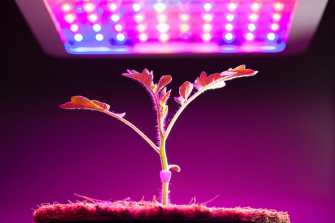 understanding the basics of grow lights for indoor plants and indoor gardening
