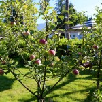 Tiny Orchards Potted Fruit Trees Modern Farmer