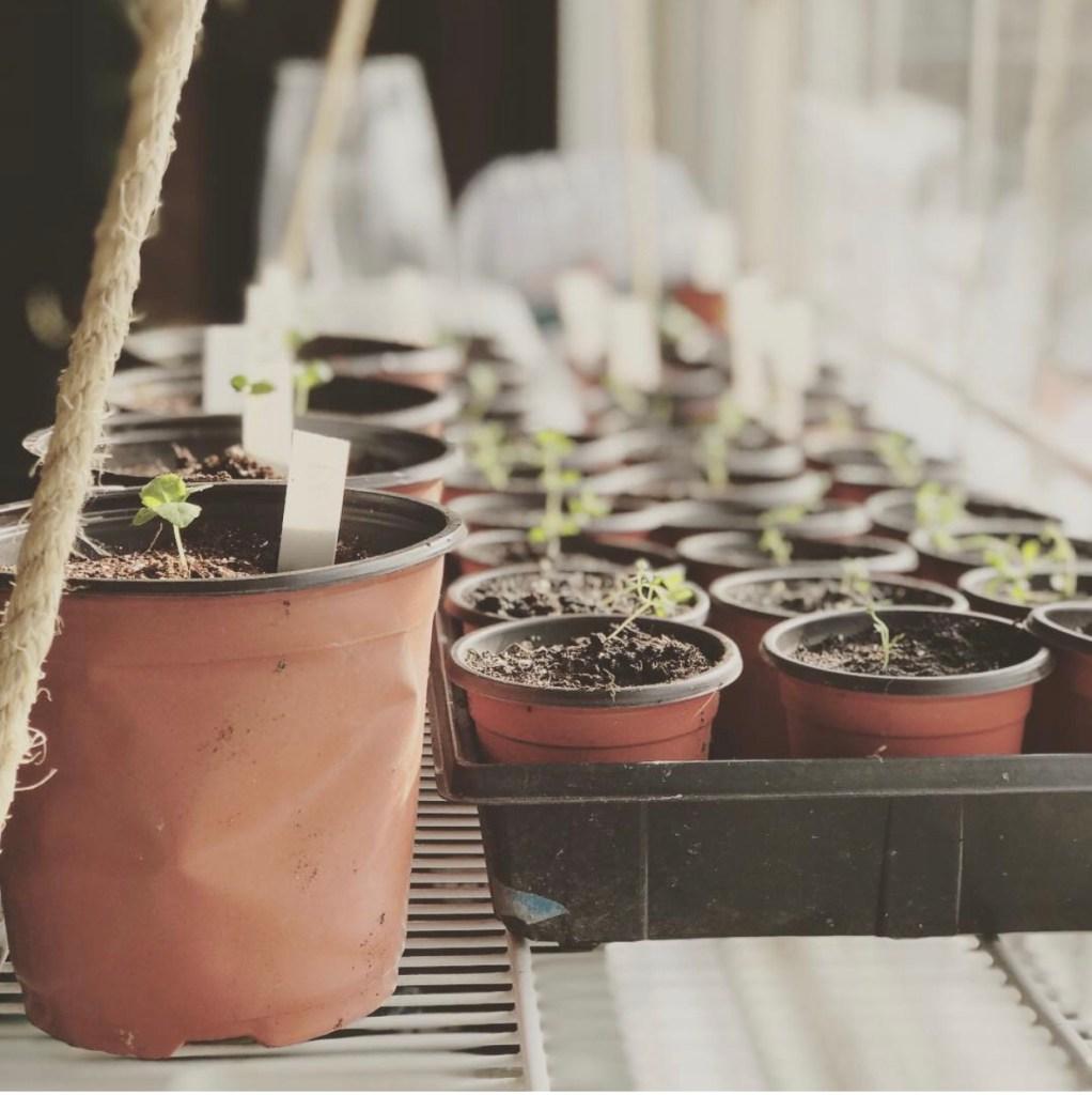 Seedling window growing set up