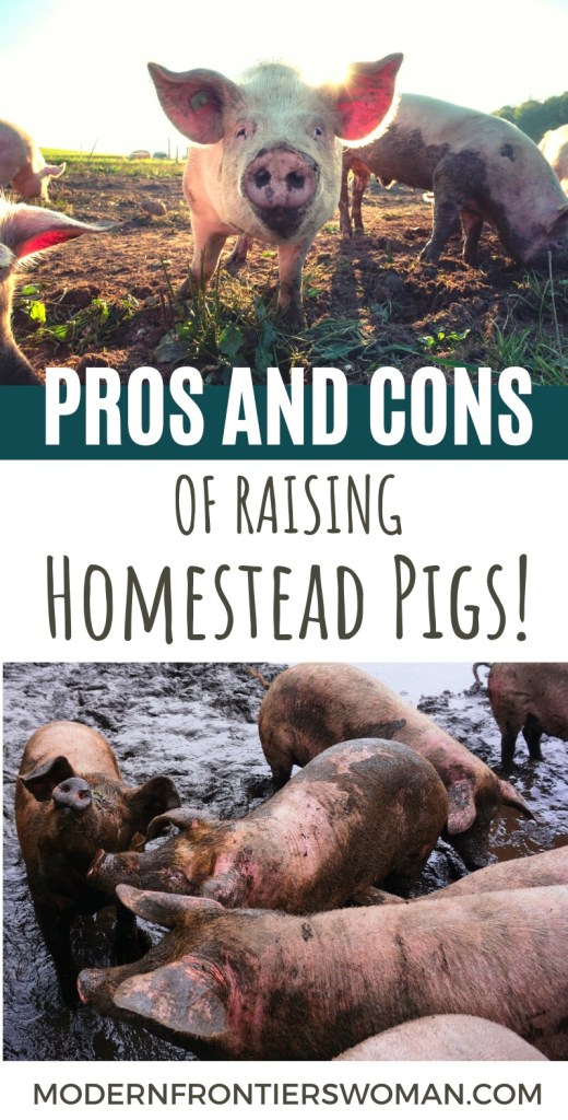 Pros and Cons of Raising Homestead Pigs