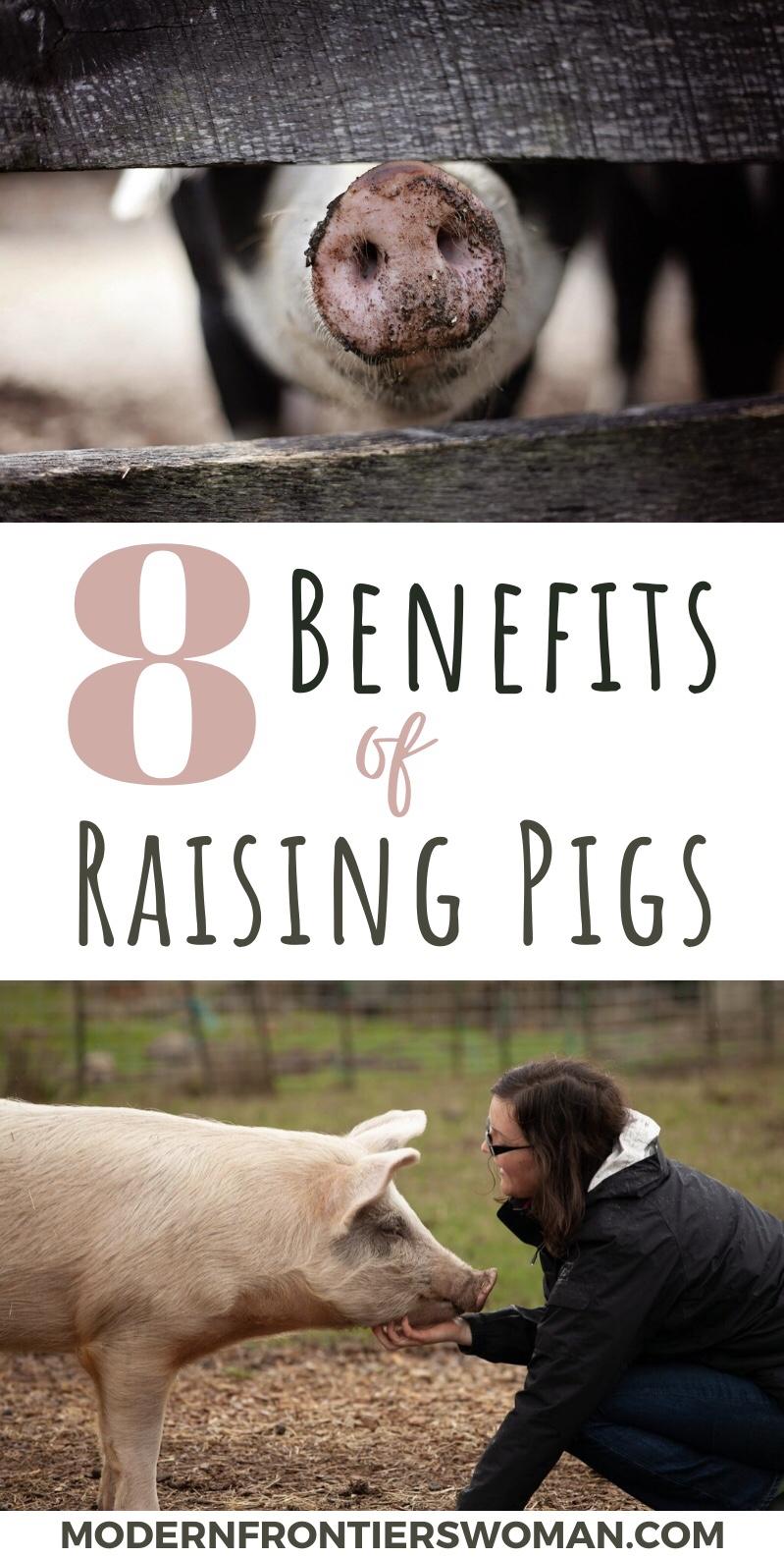 8 Benefits of Raising Pigs
