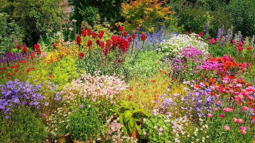 Wildflower Cottage Garden Design