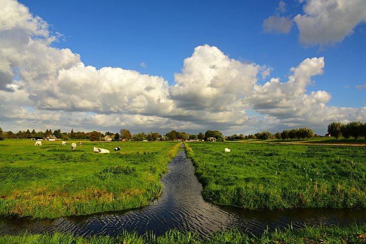 swale in farm field