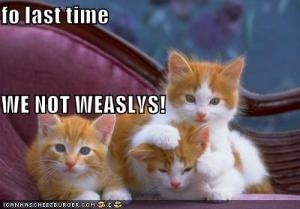 funny-pictures-orange-weasly-cats