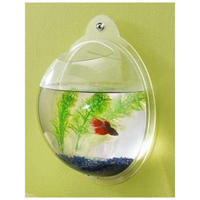 wall-mounted-fishbowl-betta-goldfish