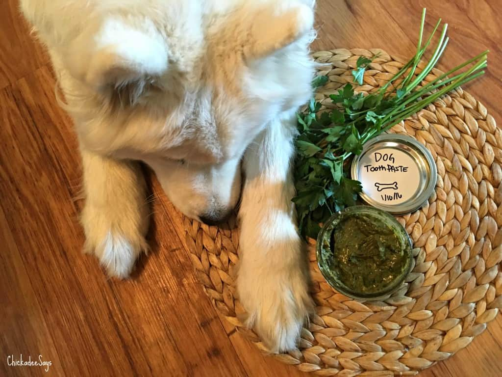 DIY All Natural Dog Toothpaste finished