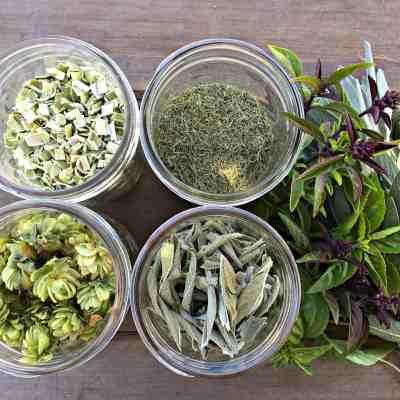 Dehydrator Basics: Herbs