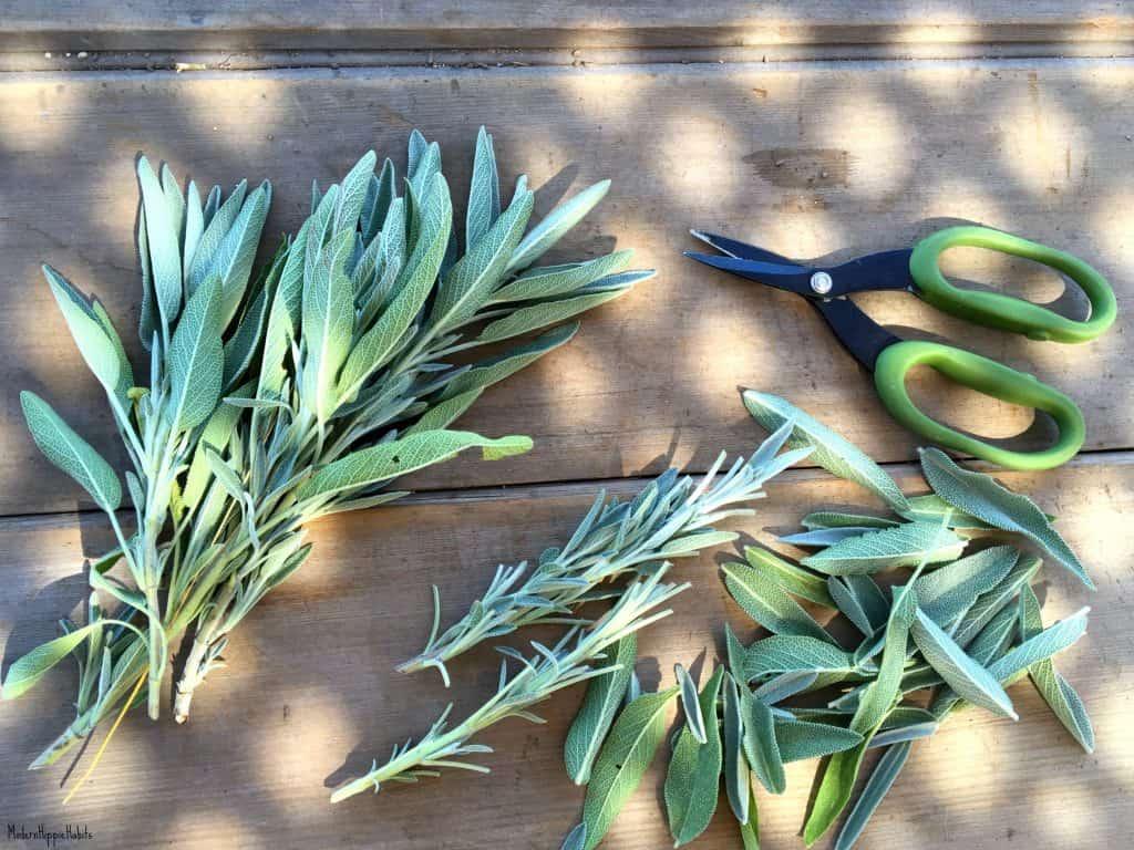 Dehydrator Basics Herbs